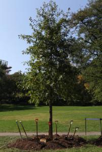 Tree No: 500,000